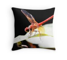 Cardinal Meadowhawk on Home Perch Throw Pillow