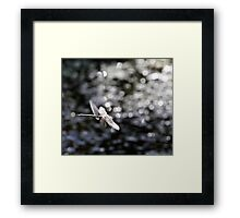 Across the Sea of Stars (Paddle-Tailed Darner) Framed Print