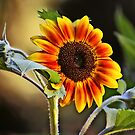 Sunflower by ibjennyjenny