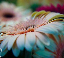 Pretty Flowers by ShahnaChristine .