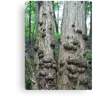 Twin Trees with Galls-CANCER don't you see? Canvas Print