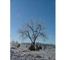 Ice Storm Tree Photographic Print