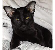 Loki Oriental Cat Photographic Print
