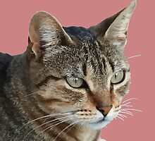 Stunning Tabby Cat Close Up Portrait Vector Isolated by taiche