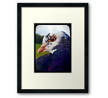 Pigeon TTV Framed Print