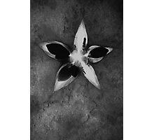 The Secret Star Photographic Print