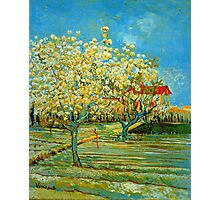 'Orchard' by Vincent Van Gogh (Reproduction) Photographic Print