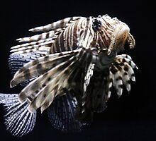 Lion Fish by Terence Russell