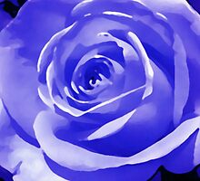 Blue Rose Flowerhead i phone and i pod case by jenny meehan