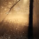 22.5.2015: Cotton Grass by Petri Volanen