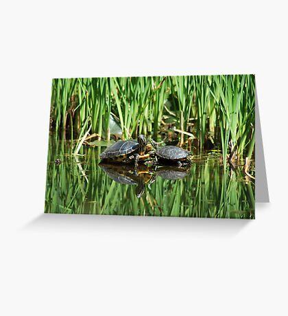 Mirrored turtles Greeting Card