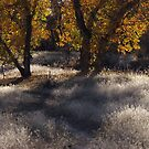 Path Into Fall by A.M. Ruttle