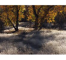 Path Into Fall Photographic Print
