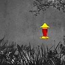 ...and the  hummingbird sees the feeder by Buckwhite