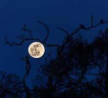 Full Moon by tracesofwar