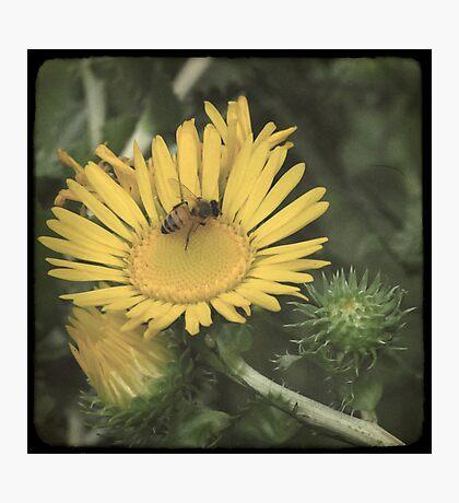 Wildflower TTV Photographic Print