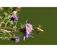 091409-122 Photographic Print