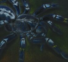 Poecilotheria metallica Sticker