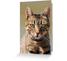 Portrait Of A Cute Tabby Cat With Direct Eye Contact Greeting Card
