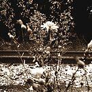 Tracks by lroof