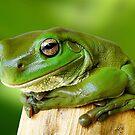 Friendly Frogs by JulieM