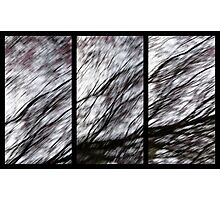 It's an ill Wind Photographic Print