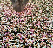 A Carpet of Petals by KatMagic Photography