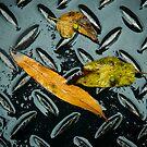 Untitled.00233 by Byron  Gates Jr