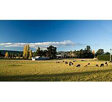 Alpaca farm Photographic Print