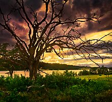 aget lake and dead oak  rogue valley by daledaniel