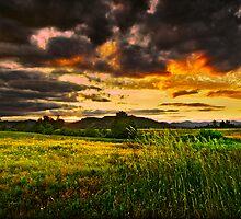 evening grasses at denman  rogue valley by daledaniel
