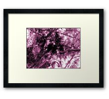 Study in Light and Dark – A Canopy of Branches in Pink  Framed Print
