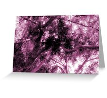 Study in Light and Dark – A Canopy of Branches in Pink  Greeting Card