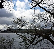 Lake District Branches by loubylou2209