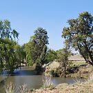 Coolaburragundy Creek Coolah NSW by Julie Sherlock