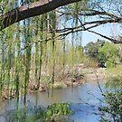 Coolaburragundy Creek by Julie Sherlock