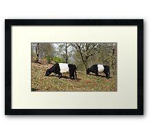 Panda Cows Framed Print