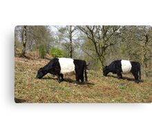 Panda Cows Canvas Print
