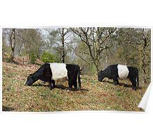 Panda Cows Poster
