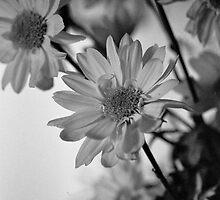 Flowers - Still Life by Ken Taylor