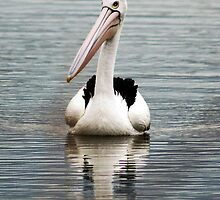 Feathered Friend by Rachael Taylor