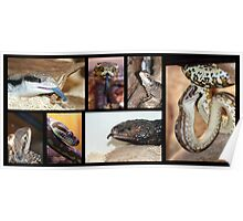 Magie's Reptiles Poster