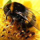 Big Boy Bee by pat oubridge