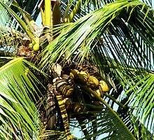 Coconut Tree, Murni's Villas, Bali by JonathaninBali