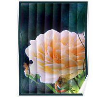 rose card Poster