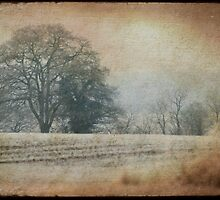frozen countryside by Sonia de Macedo-Stewart