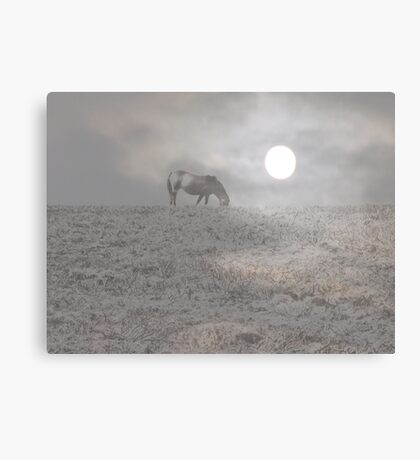 Horse and Moon Canvas Print