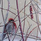 First Snow Visitor by Leslie Gustafson
