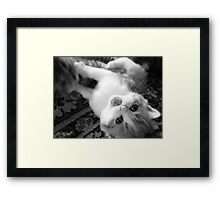 Cat fight... Framed Print