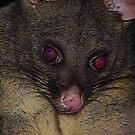 My possum by Alina Holgate
